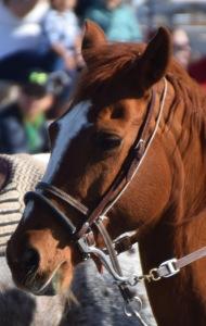 many beautiful horses!
