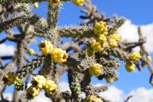 So many cacti varieties!