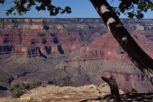 Trees help frame a canyon sight!